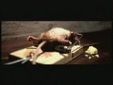 реклама прикол с крысой